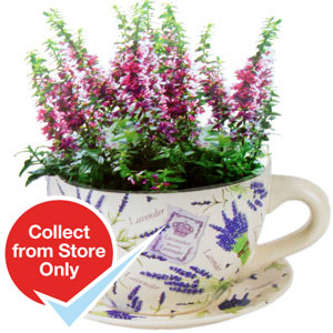 Buy Giant Ceramic Tea Cup And Saucer Planter Floral Lavender At Home Bargains