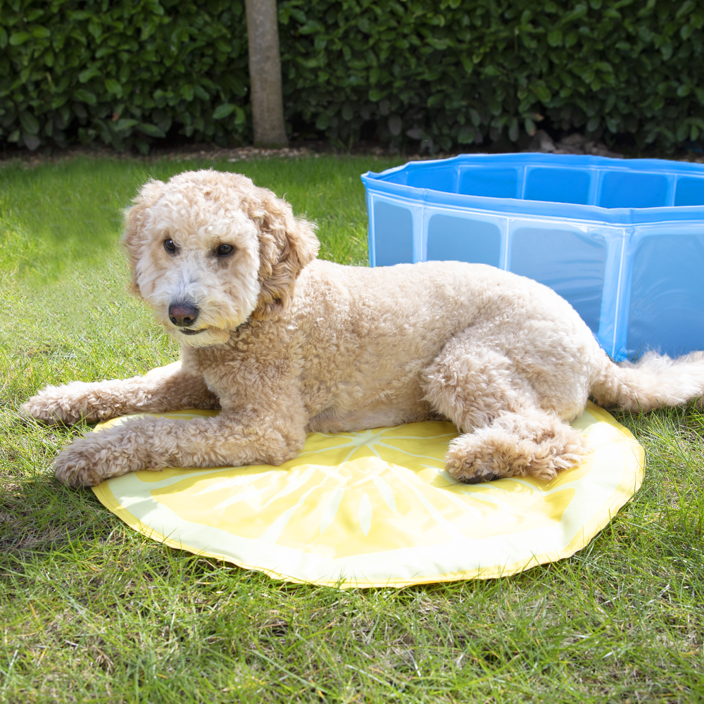 Picture of My Pets: Cooling Mat - Lemon