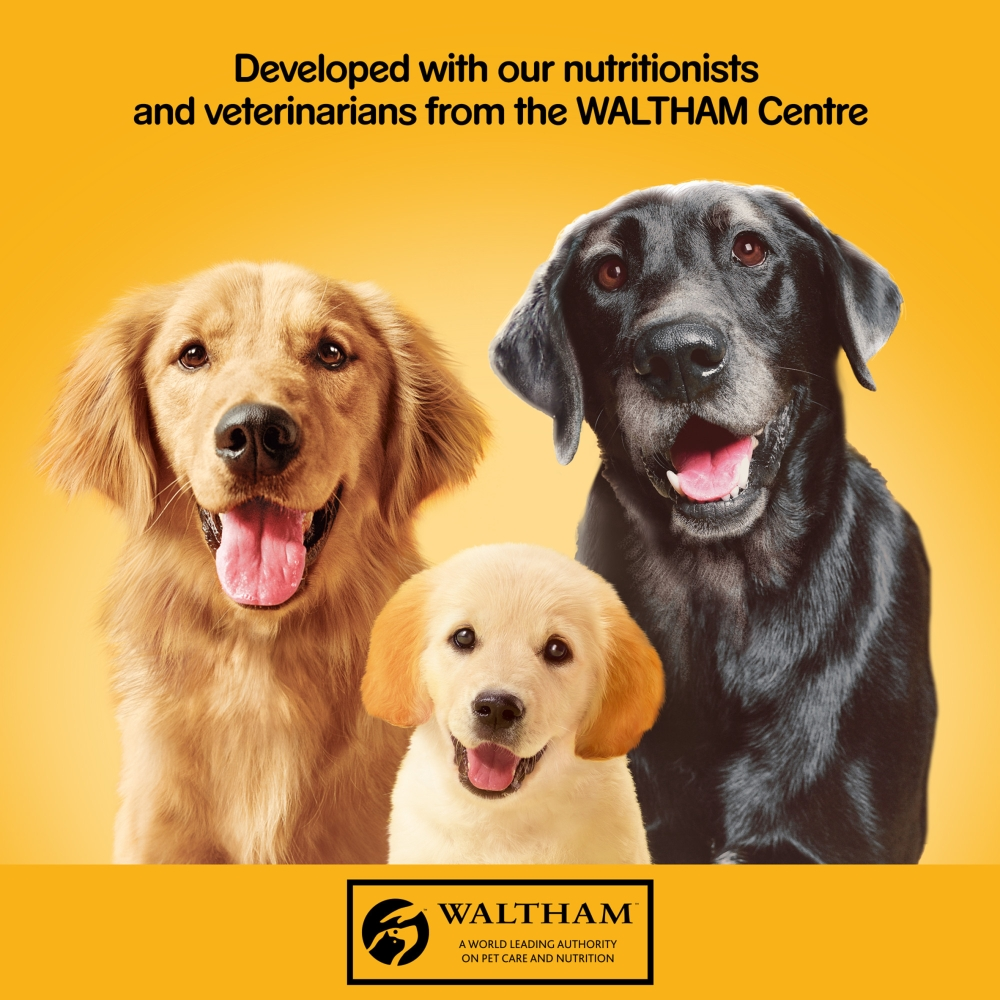 Picture of Pedigree Adult Wet Dog Food Tins Mixed Selection in Jelly Jumbo Pack 24 x 385g
