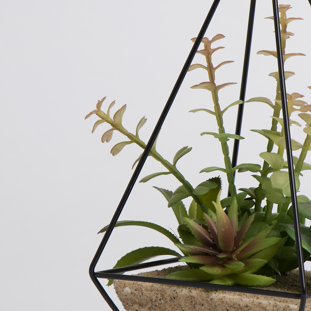 Picture of Ports of Call by Jeff Banks: Succulent In Black Prism