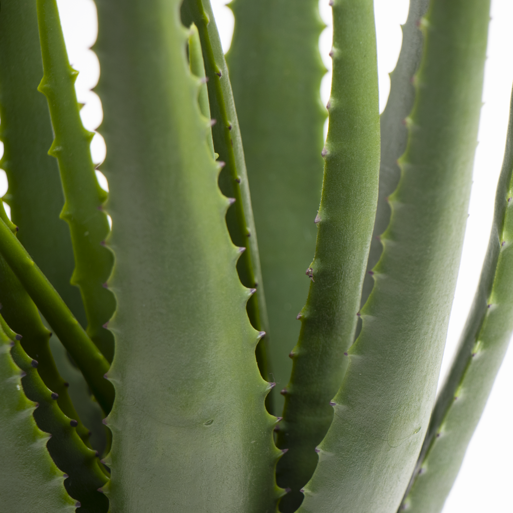 Picture of Home Collections: 55cm Artificial Aloe Indoor Plant