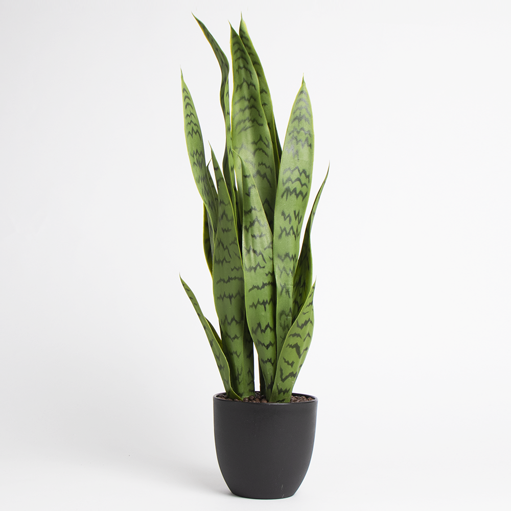 Picture of Home Collections: Faux Snake Plant in Black Pot